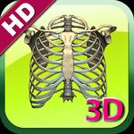 3D Human Skeleton Rib HD